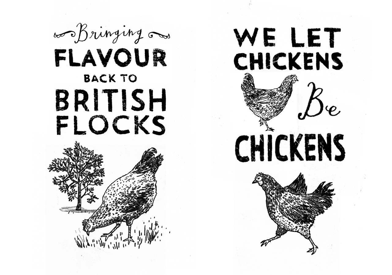 The Thoughtful Producer Chicken Illustrations
